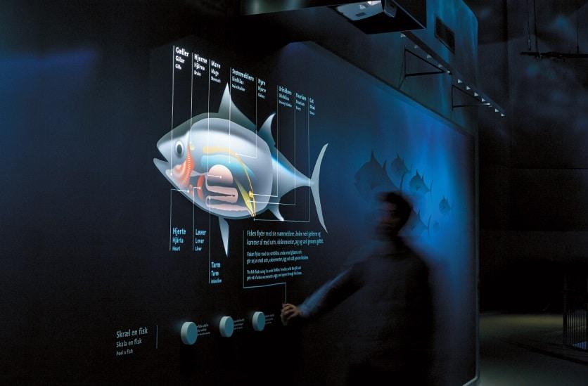 Per Short-Throw-Projektor wird das Innenleben des Thunfischs sichtbar