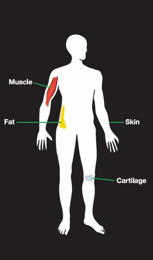 Der Mensch mit seinen verschiedenen Körperteilen, die Funksignale absorbieren.