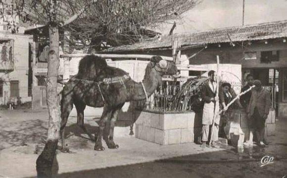 Der Brunnen des Le SafSaf vor 120 Jahren